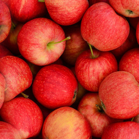 Prodaja sadnica jabuka