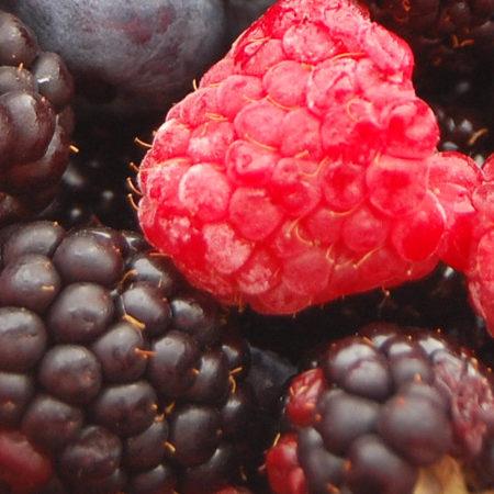Sadnice jagodičasto voće